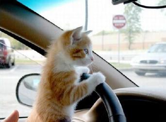Kitten driving to computer repair shop