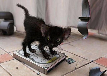 Chicopee MA kitten standing on broken hard drive